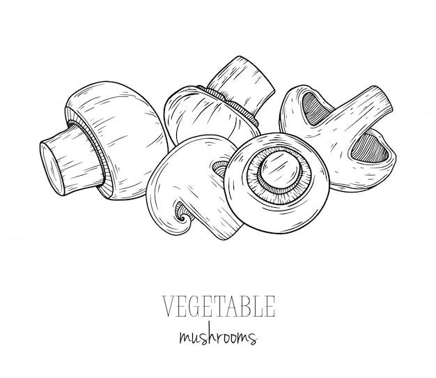 Fungo, champignon isolato su sfondo bianco. illustrazione