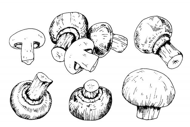 Collezione di funghi con funghi prataioli in stile incisione