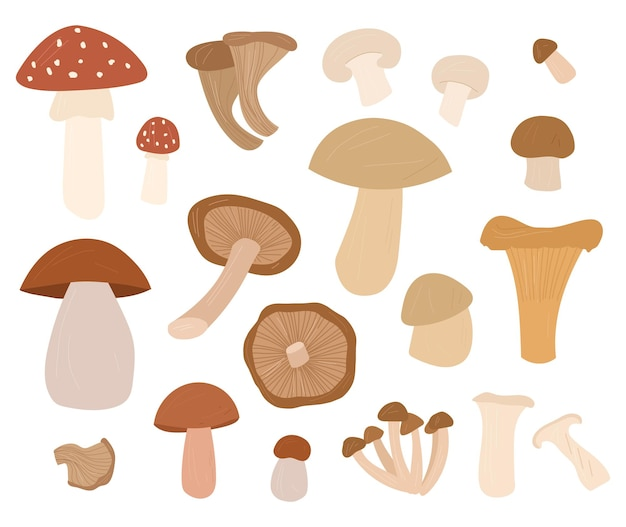 Illustrazioni di set di cartoni animati disegnati a mano di funghi tutti gli elementi sono isolati su sfondo bianco