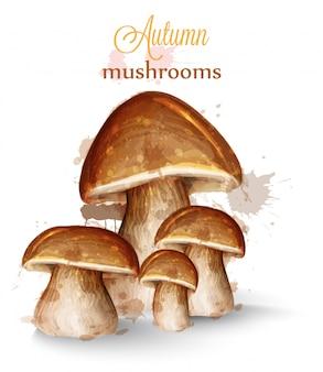 Acquerello di funghi