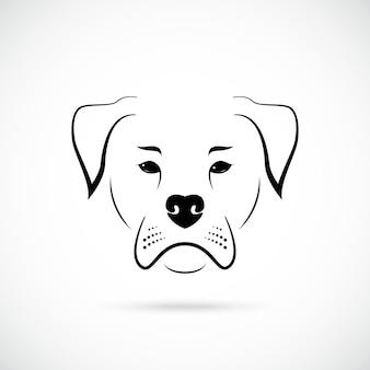 Muso bulldog americano su sfondo bianco