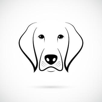 Muso di cane su sfondo bianco