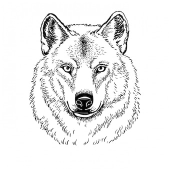 Lupo della museruola isolato su fondo bianco, illustrazione.