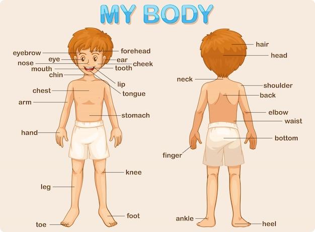 Il mio corpo