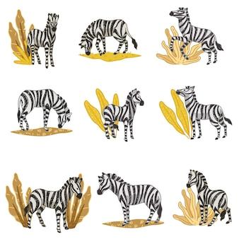 Habitat naturale di zebre, animali isolati che mangiano foglie e piante floreali