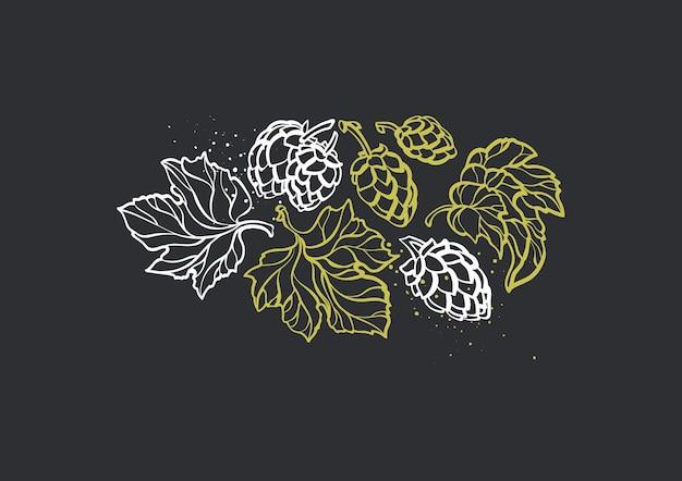 Ramo di foglie di cono di luppolo naturale