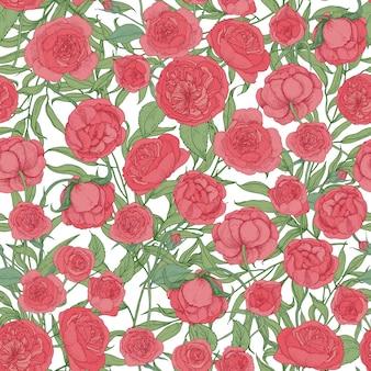 Modello senza cuciture naturale con giardino fiorito rosa inglese