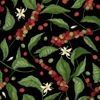 Modello senza cuciture naturale con rami esotici di coffea o caffè, foglie, fiori che sbocciano, boccioli e frutti o bacche sul nero