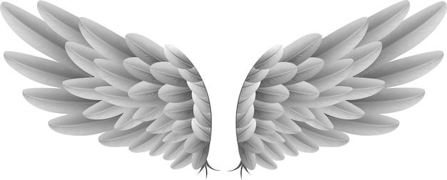Ali di oca bianca naturale con sfondo