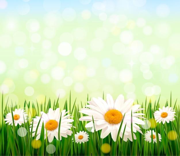 Sfondo della natura con erba verde e fiori e cielo blu.