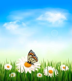 Sfondo della natura con erba verde e fiori con farfalla