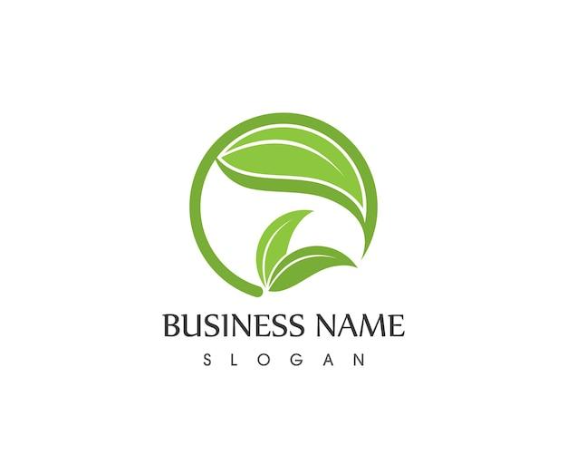 Modello di foglia natura icona logo design vettoriale