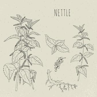 Illustrazione isolata botanica medica dell'ortica. pianta, foglie, radice, fiori disegnati a mano insieme.