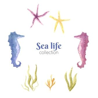 Bella collezione di acquerelli sea life.