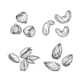 Illustrazione di noci. schizzo astratto di mandorle, anacardi, nocciole e pistacchi. illustrazione disegnata a mano.
