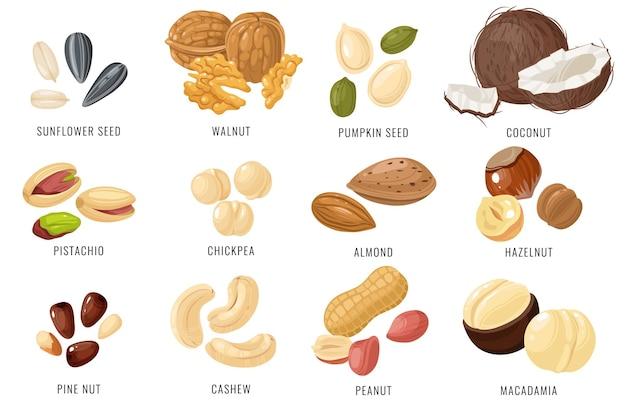 Illustrazione di progettazione di noci e semi