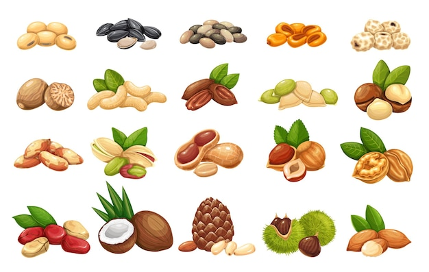 Set di icone di noci, semi e cereali