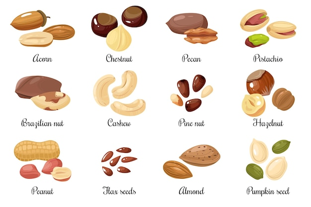 Noci e semi, pistacchi, ghiande e arachidi, castagne e noci pecan. set di snack vettoriali per cartoni animati con semi di anacardi e nocciole, zucca e lino