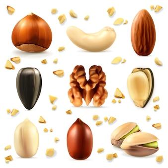 Frutta a guscio, set di icone vettoriali
