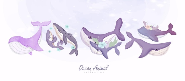 Balene animali dell'oceano e illustrazione della famiglia