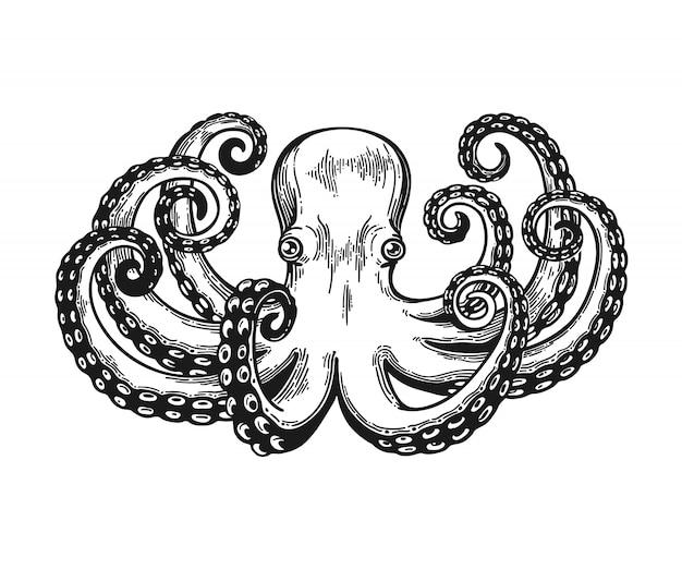 Incisione di polpo. illustrazione di incisione nera vintage. carta stile retrò. isolato su sfondo bianco