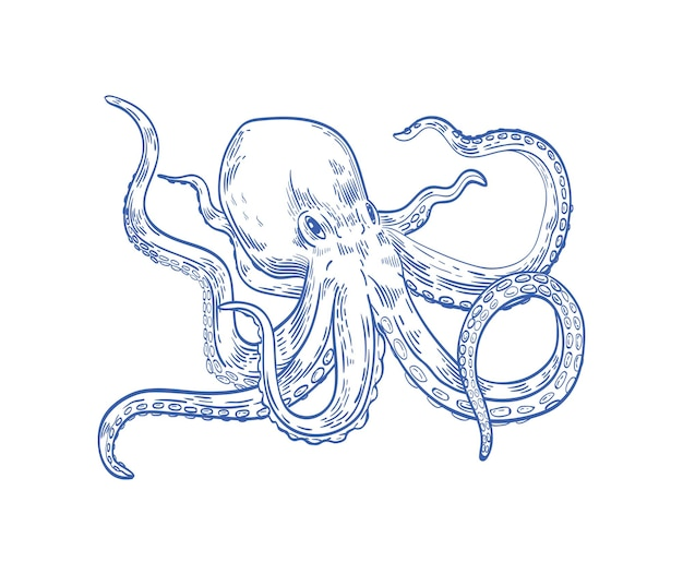 Polpo o kraken disegnati con linee di contorno