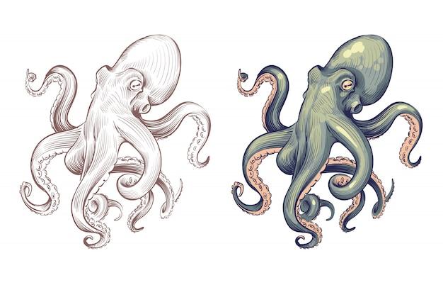 Polpo. calamari animali marini frutti di mare con tentacoli cartoon e stile disegnato a mano. set di polpi