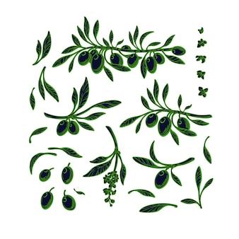 Oliva set germoglio verde ramo fiore isolato illustrazione grafica spagna natura collezione