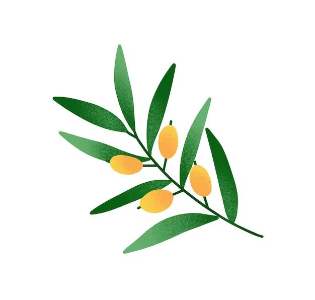 Illustrazione di vettore del fumetto di ramo d'ulivo. ramoscello con foglie verdi e frutti di oliva gialla. simbolo di pace tradizionale isolato su priorità bassa bianca. ingrediente naturale dell'olio d'oliva, drupe crude mature.