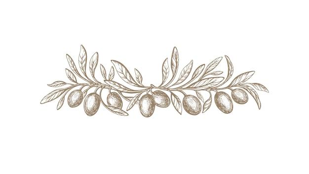 Bordo vintage rustico ramo d'ulivo vector texture frutta tratteggio fogliame grecia symbo
