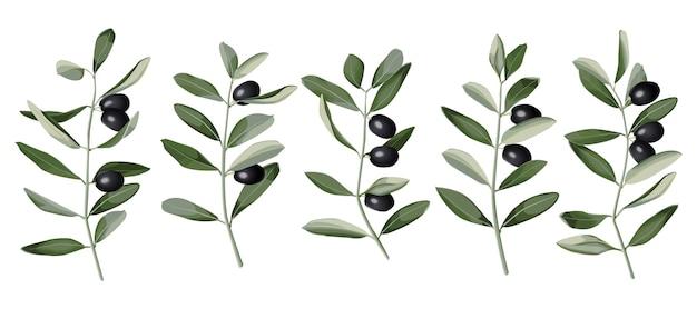 Ramo d'ulivo incastonato in stile acquerello con motivo vegetale di natura mediterranea