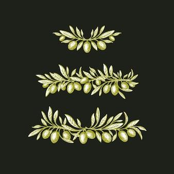 Set di rami di ulivo bordo vintage disegnato a mano foglie rustiche di frutta verde vettoriale