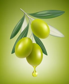 Goccia di oliva. ramo naturale con spruzzi di olio trasparente closeup goccia realistico cibo greco oliva.