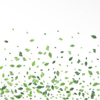 Foresta di fogliame di olivo