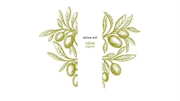 Cornice d'oliva texture ramoscello verde frutta foglie fresche natura incidere illustrazione