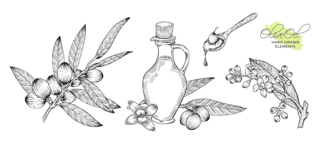 Pacchetto di illustrazione disegnata a mano di olio d'oliva