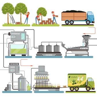 Fasi del processo di produzione di olio d'oliva, raccolta delle olive, confezionamento dei prodotti finiti e consegna al consumatore illustrazioni su sfondo bianco