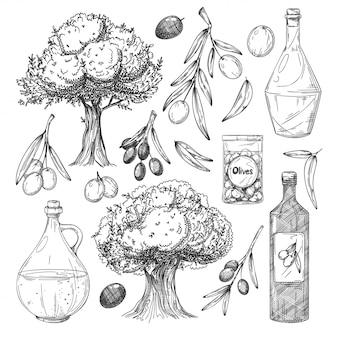 Set di schizzi di produzione di olio d'oliva. olivo, ramo, foglie, bottiglie con olio, olive nella collezione di icone barattolo. illustrazione dell'annata di produzione di alimenti biologici