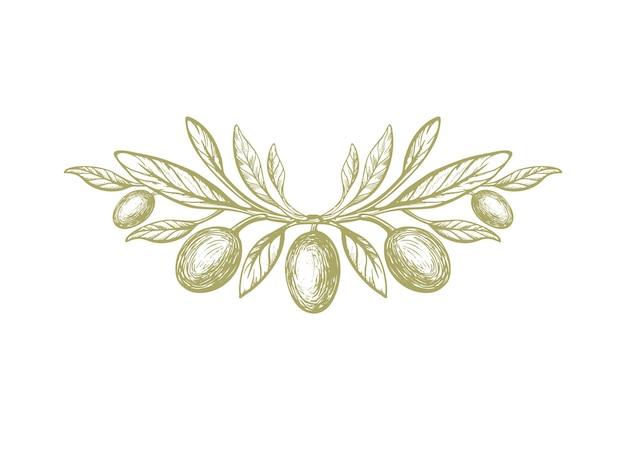 Oliva rustico simbolo trama ramoscello verde italiano frutta fogliame vintage natura illustrazione incisa grecia pattern