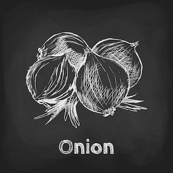 Elemento di utilizzo del design disegnato a mano dell'illustrazione di schizzo della cipolla