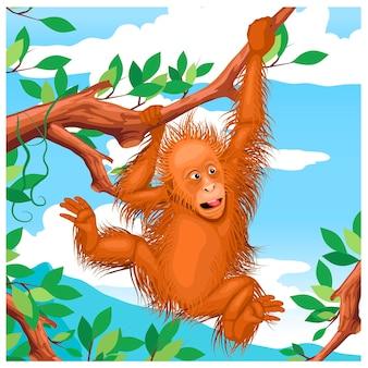 Illustrazione animale indonesiano degli oranghi
