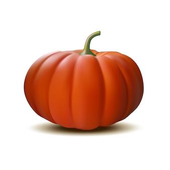 Zucca realistica arancione su sfondo bianco, simbolo del ringraziamento del raccolto.