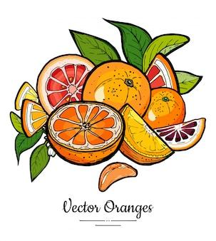 Le arance hanno messo il vettore isolato. mezza arancia tagliata intera, fette di pompelmo rosso, foglie di fiori.