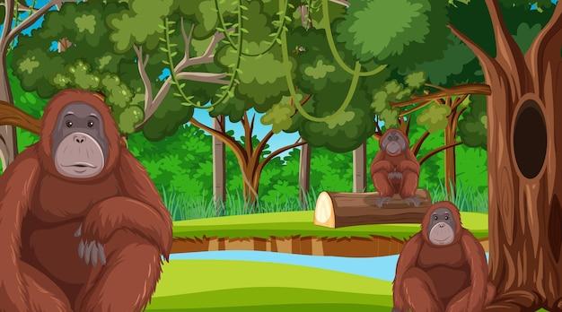 Orango nella foresta o nella scena della foresta pluviale con molti alberi