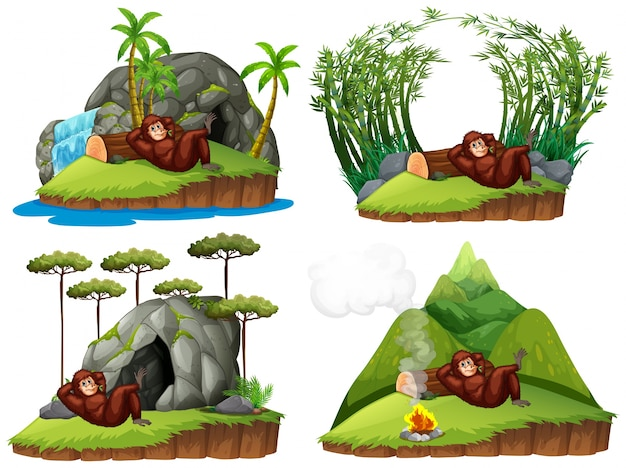 Orangutan in quattro scene diverse