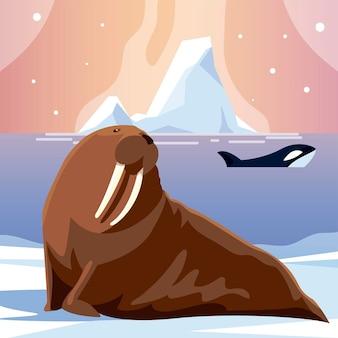 Orca balena e tricheco animali polo nord e illustrazione di iceberg