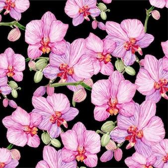 Fondo del fiore dell'orchidea dipinto in acquerello