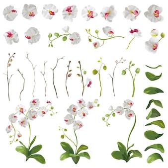 Elementi floreali di fiori tropicali dell'orchidea in stile acquerello. vettore
