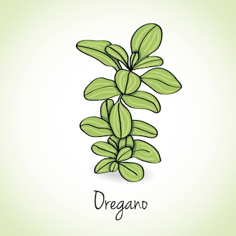 Origano erbe e spezie.