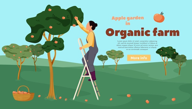 Banner piatto fattoria biologica con alberi paesaggistici all'aperto e donna che raccoglie mele in giardino